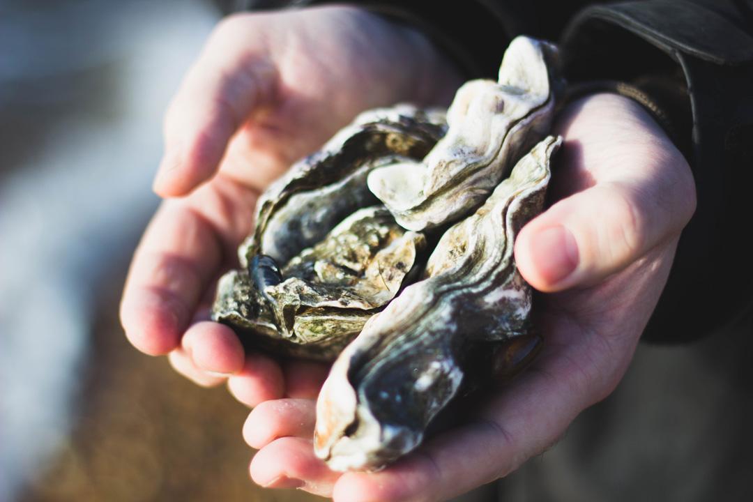 4-LAfM9yAg-oysters1.0