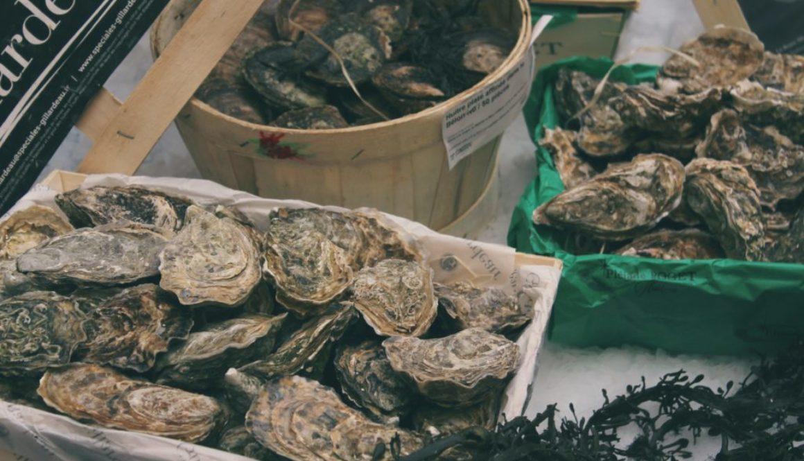 Oysters in bucket